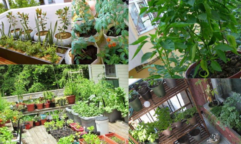 Balkon Bahçeciliği ile Güzel Bir Hobi Edinin