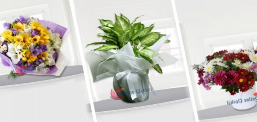 Doğum Günülerinizi Anlamlı Olan Çiçekler İle Hatırlayın